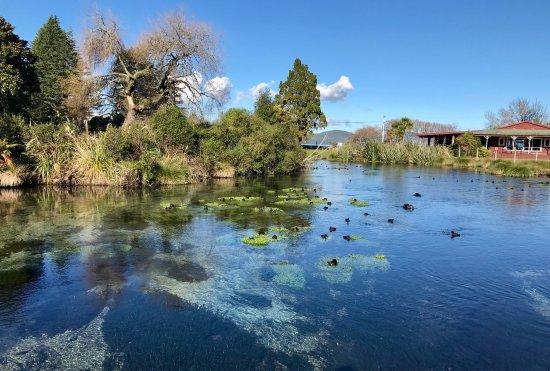 Hamurana, Nouvelle-Zélande : photo1.jpg