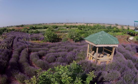 Avgorou, Chipre: the lavender meditation labyrinth