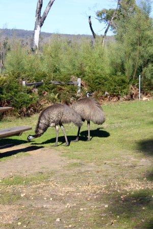 Χάμιλτον, Αυστραλία: photo7.jpg