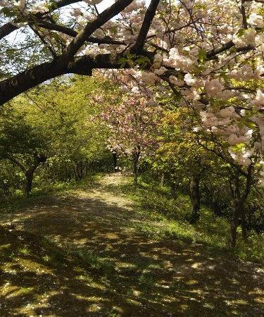 Ominesan Sakura Park