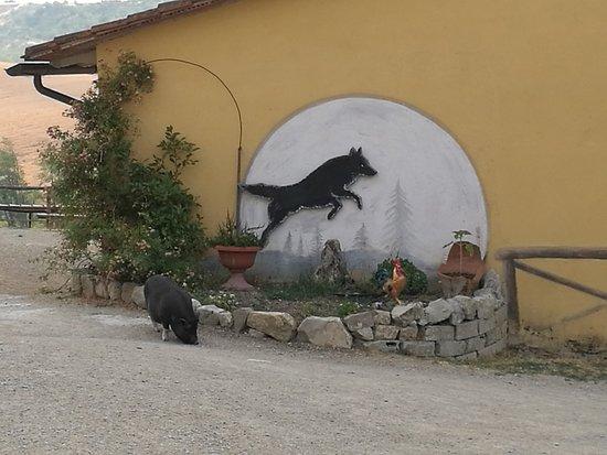 Toscana Ranch: IMG_20170623_080855_large.jpg
