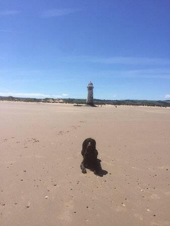 Is The Beach At Talacre Dog Friendly