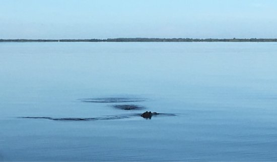 Airboat Rides Melbourne: photo0.jpg