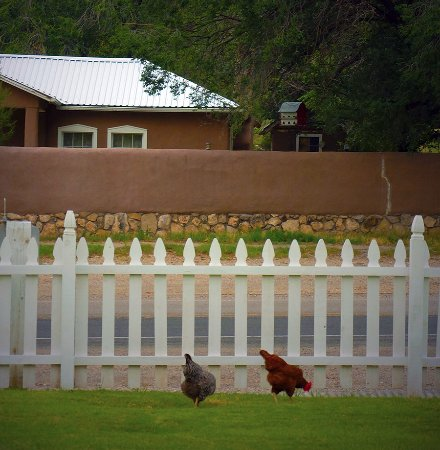 Lincoln, Nuevo Mexico: Lovely hens provide eggs for breakfast!