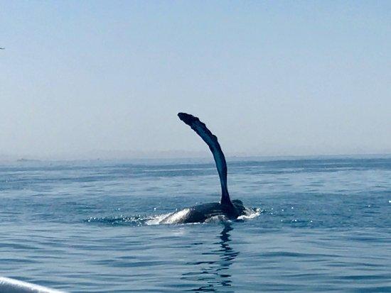 Avila Beach, Kalifornia: photo0.jpg