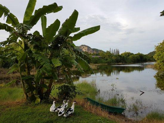 Kum Nangpaya: The ground area around the resort, just stunning, 1 min walk from your bungalow.