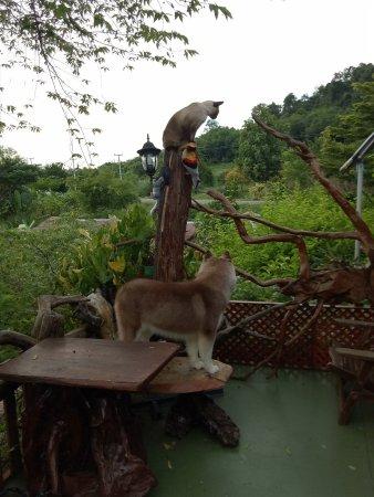 Kum Nangpaya : Adorable pets!