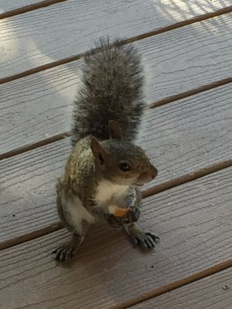 The Pelican: Friendly Squirrel at Breakfast