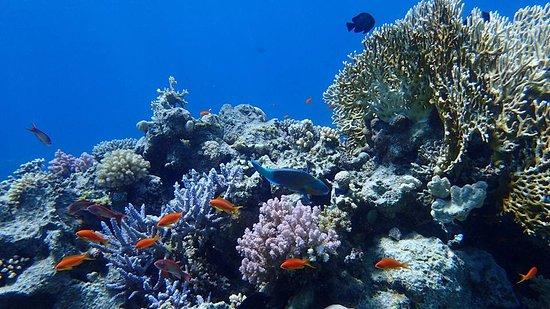 Sharm Marine Divers