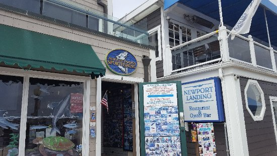 Newport Landing Whale Watching: If whale watching at 1130 show up to this site.