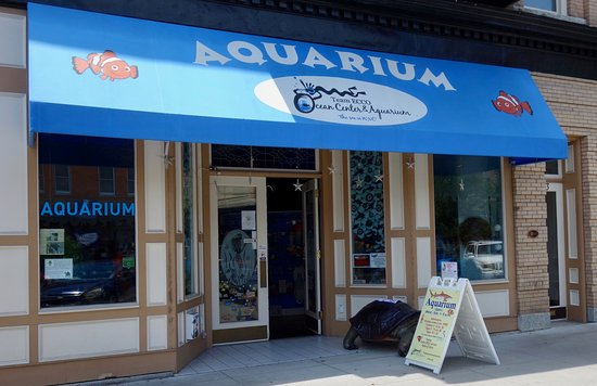 Team Ecco Ocean Center And Aquarium Entrance Picture Of
