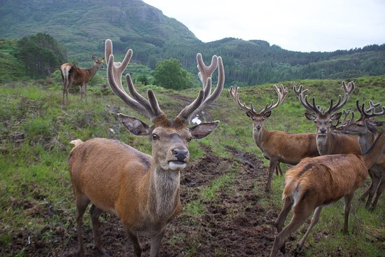 Lochcarron, UK: These beautiful guys were waiting for us right at the top of the hill.