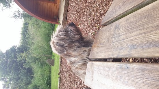 Holsworthy, UK: Willow checking out the picnic tables