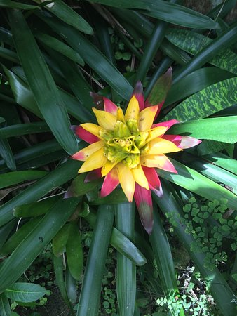 Hunte's Gardens: more pretty flowers