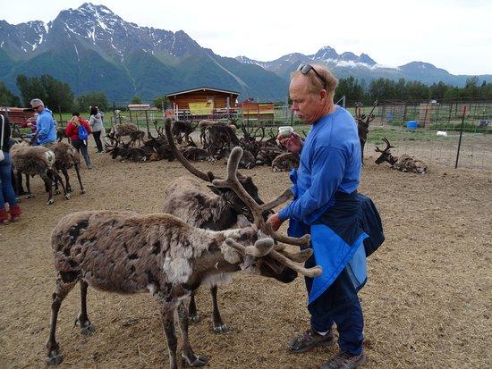 Reindeer Farm: The reindeer were so friendly