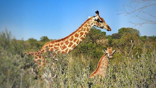 Rorke's Drift, جنوب أفريقيا: photo9.jpg