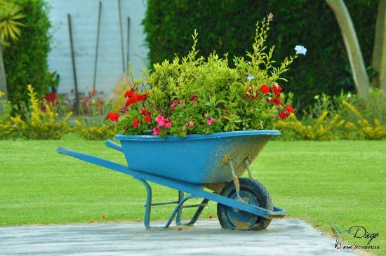 Puembo, Ecuador: Old carts used to plant flowers in Su Merced