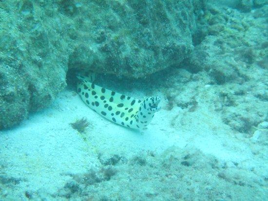 Praslin, Seychellerna: murène