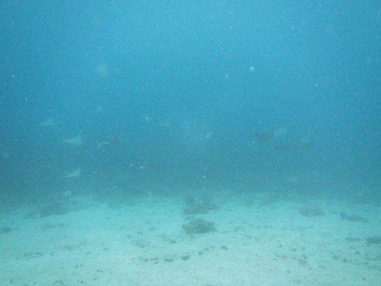 Octopus Diving Center صورة فوتوغرافية