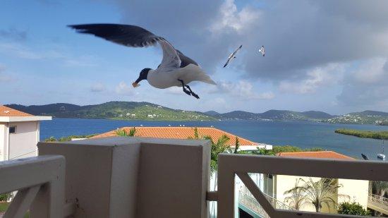 Sea Breeze Hotel-bild