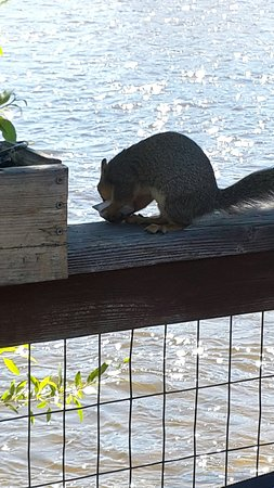 ‪‪Saratoga‬, ‪Wyoming‬: Squirrel eating a stolen packet of jelly on the deck‬