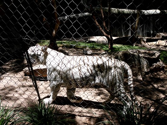 This One Too Picture Of Siegfried Roy 39 S Secret Garden And Dolphin Habitat Las Vegas