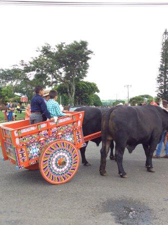 Tilarán, Costa Rica: Oxcart festival parade