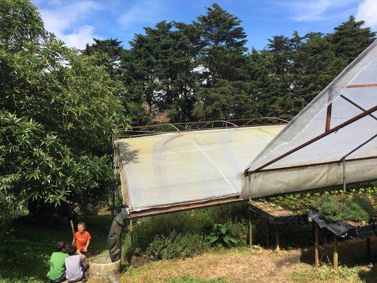 Cerro Plano, Costa Rica: Greenhouse