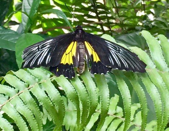 Butterfly Rainforest: photo1.jpg