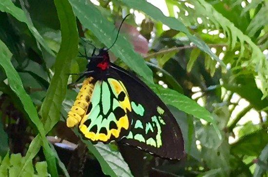 Butterfly Rainforest: photo2.jpg