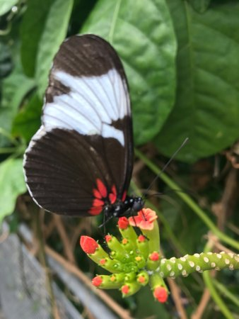 Cleveland Botanical Garden: Butterfly In The Glass House