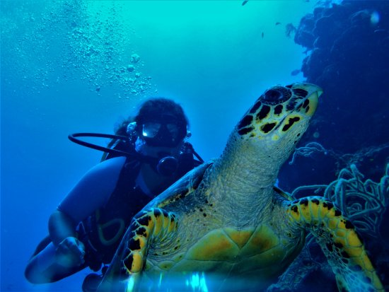 "Itza Lodge: ""I just like turtles more than sharks"""