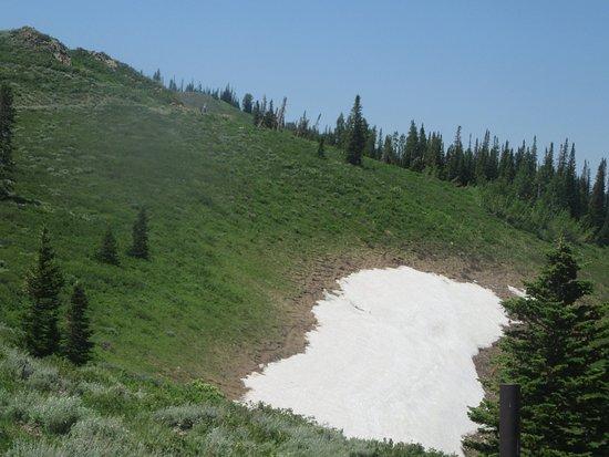Snow July 2, Guardsman Pass Scenic Backway, Park City, Utah