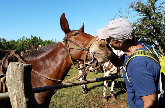 Molokai Mule Ride : Ron bonding with Marley the mule.