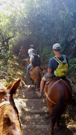 Molokai Mule Ride : Heading down to Kalaupapa.