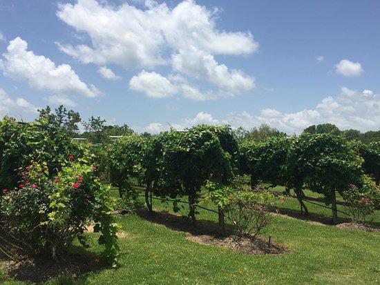 Haak Vineyards and Winery, Inc.: photo1.jpg
