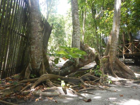 Pulau Lankayan Foto