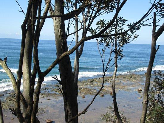 Bateau Bay, Australien: Coastal Walk