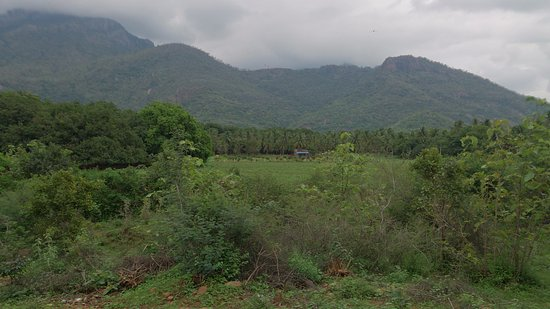 Rajapalayam, Ấn Độ: road to ayyanar falls in the western ghats