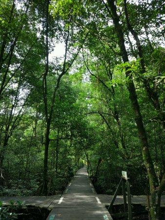 Tarakan, อินโดนีเซีย: jalan titian kayu diantara hutan mangrove