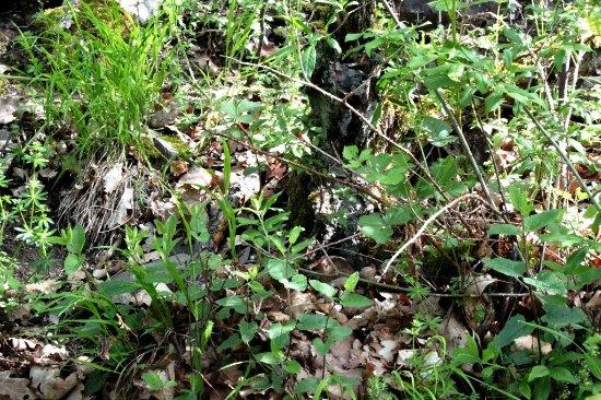 Gruenwald, Tyskland: Hier hat sich eine kleine Maus sehr gut versteckt...