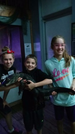 Konger Tarpon Springs Aquarium: They help younger ones hold the alligator
