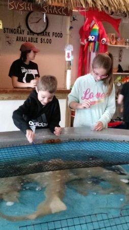 Konger Tarpon Springs Aquarium: Feeding shark