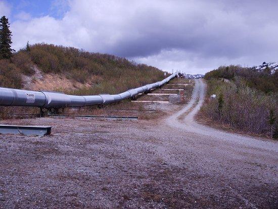 Alaskan Pipeline Dildo