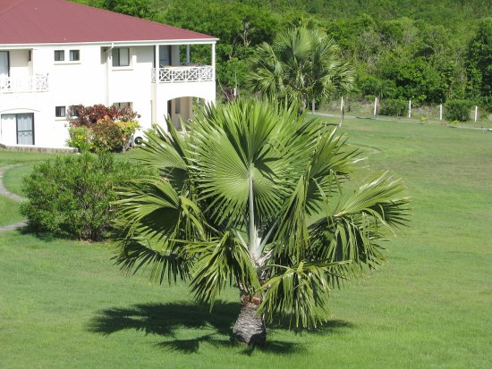 New Castle, Nevis: Hotel grounds are well maintained