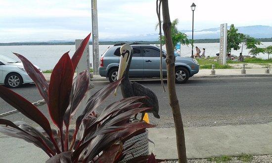 Isla Coco's Bar & Grill: Vista hacia el mar