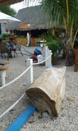 Isla Coco's Bar & Grill: Decoración del restaurante