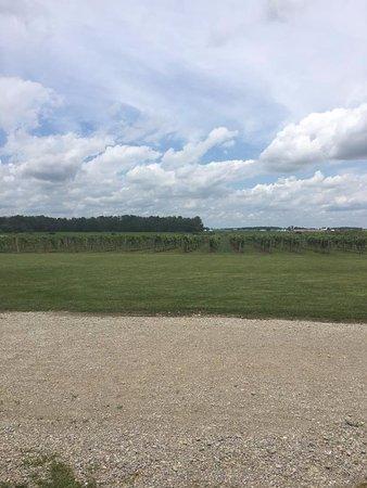 Versailles, OH: Vineyard