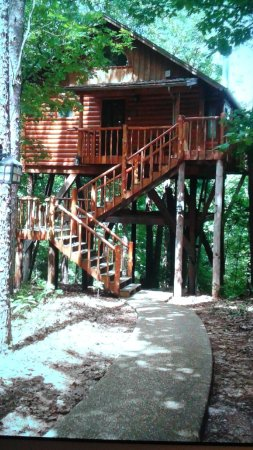 Treehouse Cottages: View of the treehouse