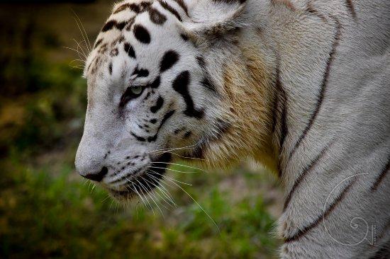 Kolkata Zoo & Zoological Garden